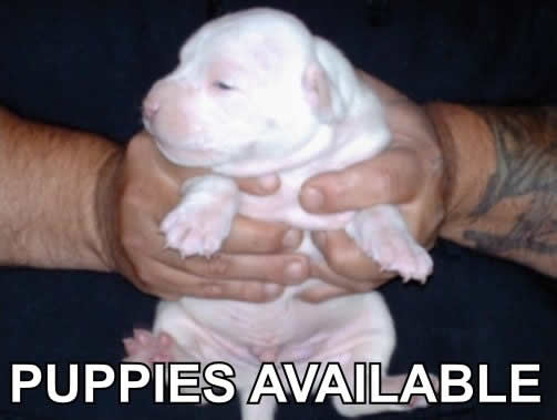 Puppies available...