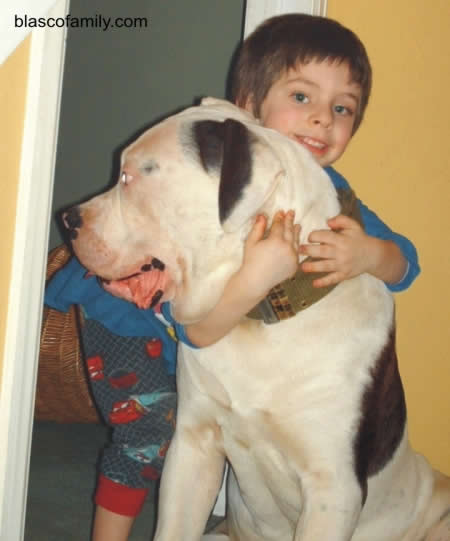 Bully type hybrid American Bulldog with son, John