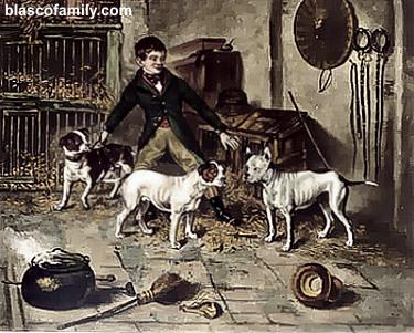 History of pitbull dog fighting