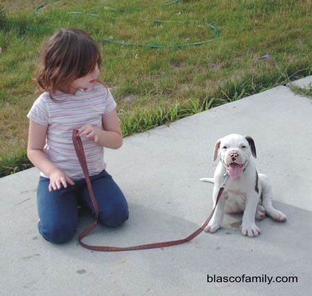 Bully type American Bulldog puppy, Mambo the Mama's Boy with Abi