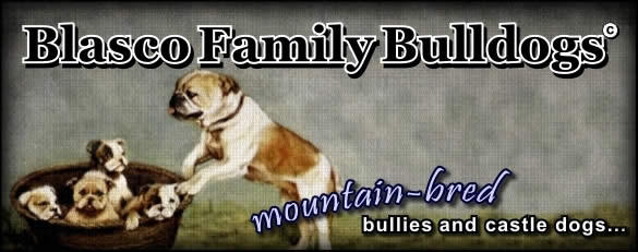 The Puppy Page - Blasco Family Bulldogs - American Bulldog